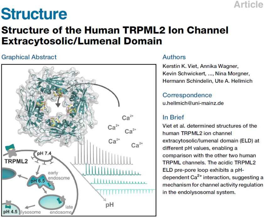 First high-resolution glimpse at human TRPML2 and its interaction with cations!
