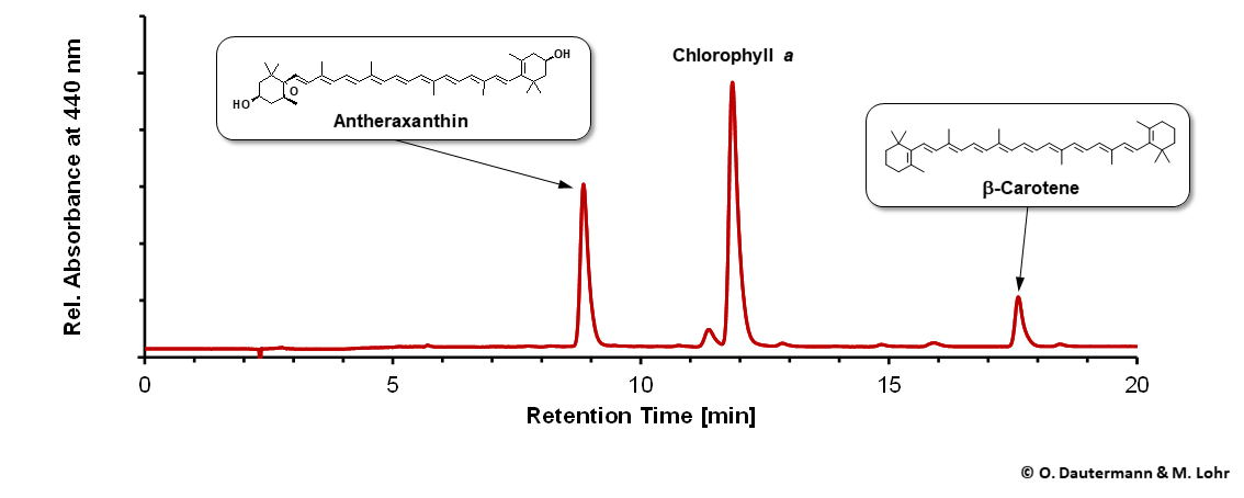 HPLC chromatogram of pigments from Madagascaria confirms antheraxanthin as the main carotenoid